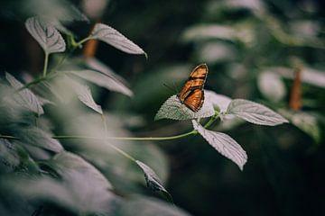 Foto eines orangefarbenen Schmetterlings auf einem Blatt von Sabine Keijzer
