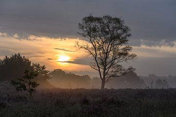 gesluierde zon op de heide van Tania Perneel