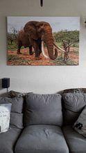 Klantfoto: Olifant (Loxodonta africana) in dreigende houding, Zimanga Game Reserve, Kwa Zulu Natal, Zuid-Afrika van Nature in Stock