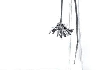 Verwelkte bloem von Julienne van Kempen