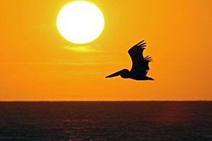 zonsondergang eagle beach van