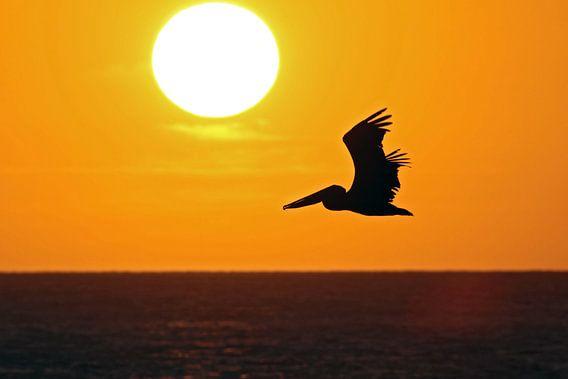 zonsondergang eagle beach van gea strucks