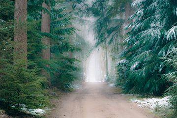 Sentier à travers les pins de la forêt de Speulderbos dans la réserve naturelle de Veluwe en hiver. sur Sjoerd van der Wal