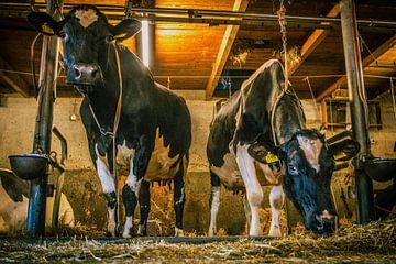 Koeien in grupstal von Erica Kuiper