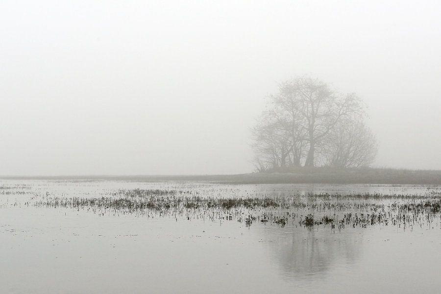 Boom in de mist bij een ven