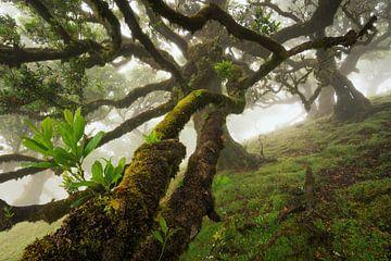In de bomen van Martin Podt