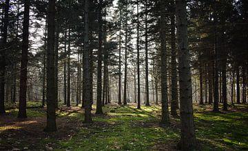 Het Bos In!  van Niek van den Berg