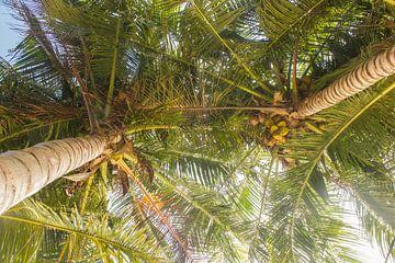 Palmbomen met kokosnoten van Marlin van der Veen