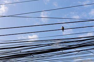 Vogel op een wirwar van vietnamese telefoonlijnen van