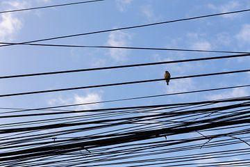 Vogel op een wirwar van vietnamese telefoonlijnen sur Studio W&W