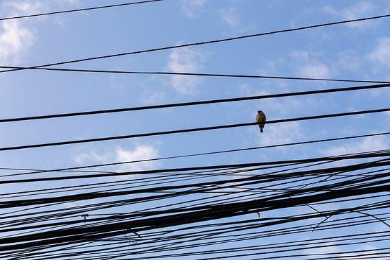 Vogel op een wirwar van vietnamese telefoonlijnen van Studio W&W