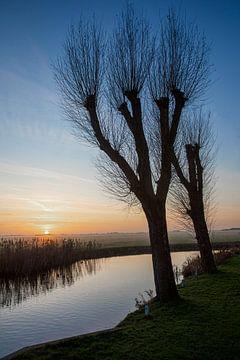 Des saules sans feuilles au coucher du soleil sur un canal à IJlst Friesland. Wout Cook One2expose sur Wout Kok