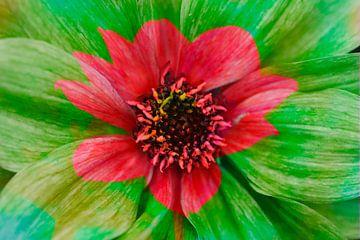 Kleurrijke, bloeiende dahlia, abstract, bloemig van Torsten Krüger
