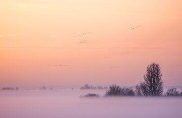 Winterabend Oostvaardersplassen von Danny Slijfer Natuurfotografie