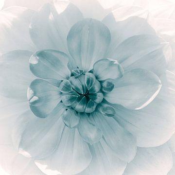 Bloemenhart van de dahlia, monochroom van Rietje Bulthuis