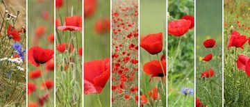 poppies palette von Yvonne Blokland