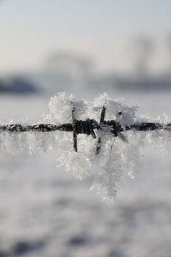 Kalter Stacheldraht von Tesstbeeld Fotografie