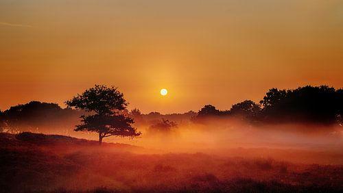 Foggy Dunes Gasteren Netherlands Zonsopkomst