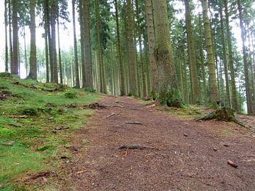 Waldwege van