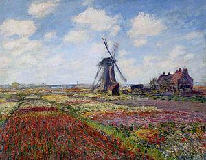 Tulpenveld in Holland - Claude Monet