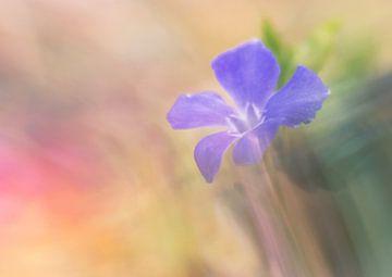 violette Blume von Remco loeffen