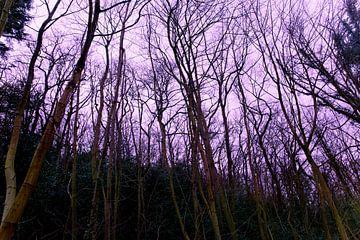 Bomen zonder bladeren von ERIX VELD