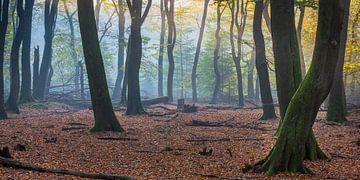 Bos van de dansende bomen van Evert Jan Kip