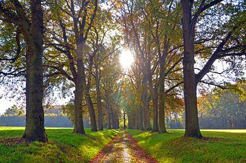 Herfst van Jaimy Buunk