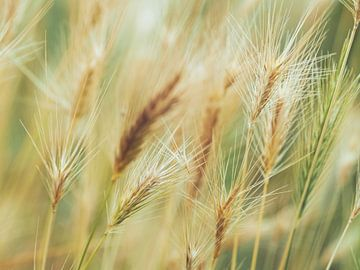 Gräser 4 von Miriam Meijer, en plein campagne.....