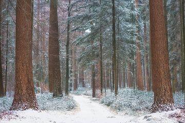 Winterwald von Cor de Hamer