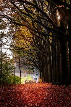 Herfst van Jaap Terpstra
