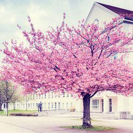 Kirschblüte in  Chemnitz van Daniela Beyer