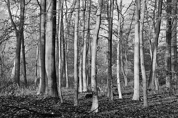 Bäume von Hermann Greiling
