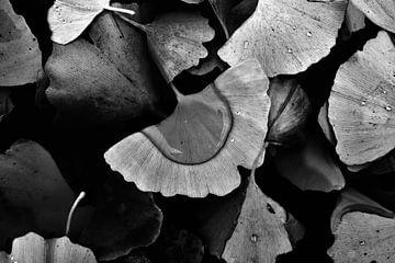 Autumn butterflies van Ann Beckers