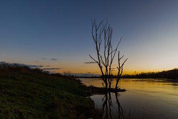 Silhouette van een boom in de maas tijdens een koude zonsondergang in de eijsderbeemden van Kim Willems