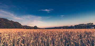 Panorama - Sommer an der Familien Farm - Getreidefelder am Bauernhof in Lubkowo von Jakob Baranowski - Off World Jack