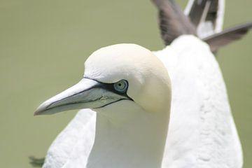 Jan van Gent, zwemvogel van shoott photography