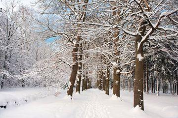 Landschaftswald mit Neuschnee von Ivonne Wierink