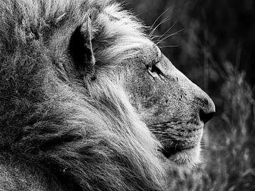 Le roi du règne animal sur Bouke Lolkema