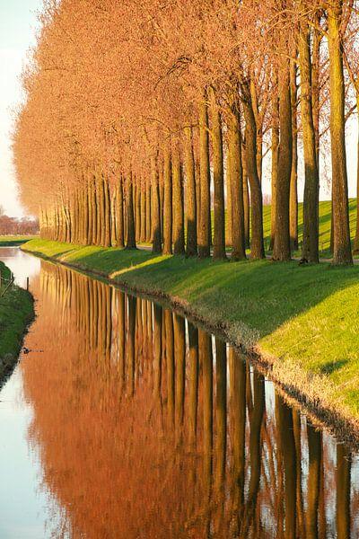 Weerspiegeling van bomen langs de Tol