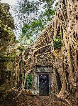 Tomb raider, Ta Prohm tempel, Cambodja van