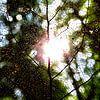 Herfst van Laura Balvers thumbnail