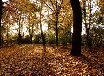 bos in de herfst van Joke te Grotenhuis