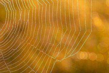 Spinnenweb met ochtenddauw en gouden achtergrond van Renske Breur