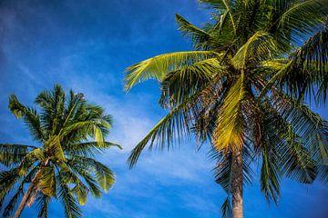 Palmbomen in Vietnam von Godelieve Luijk