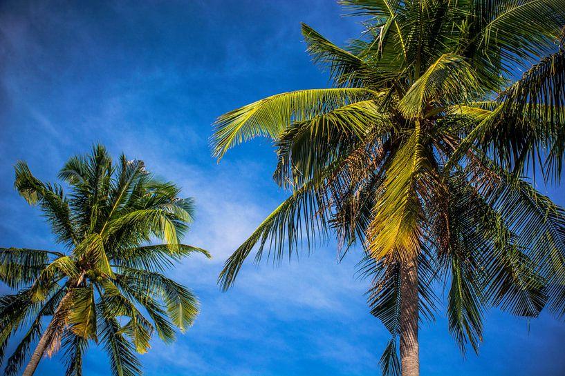 Palmbomen in Vietnam van Godelieve Luijk