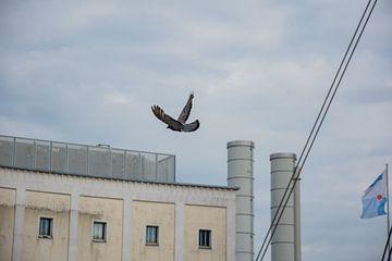 Der Flug von Joerg Keller