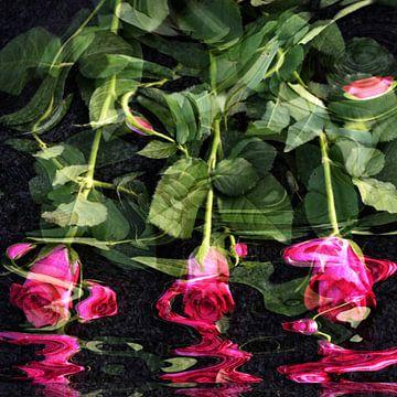 Rode rozen in het water, van Christine Nöhmeier