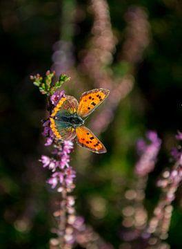 Vlinder von Victor Droogh