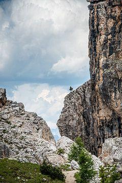 De kleine op de rots van Guy Lambrechts